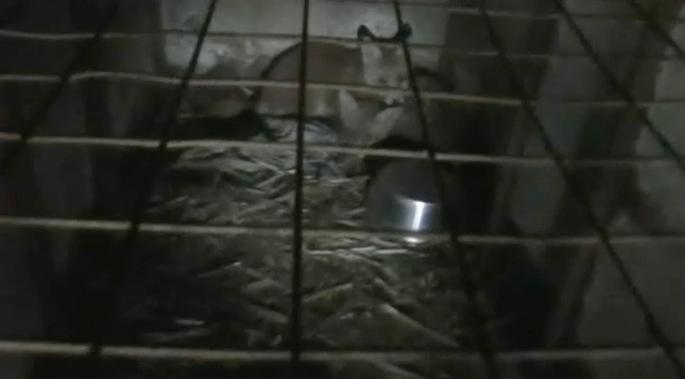Cub cage