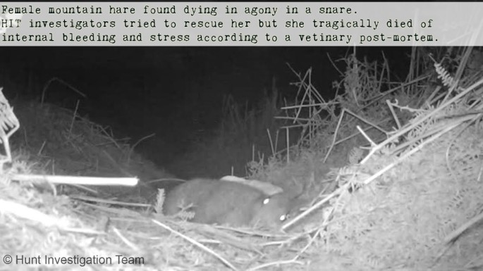 Hare text still